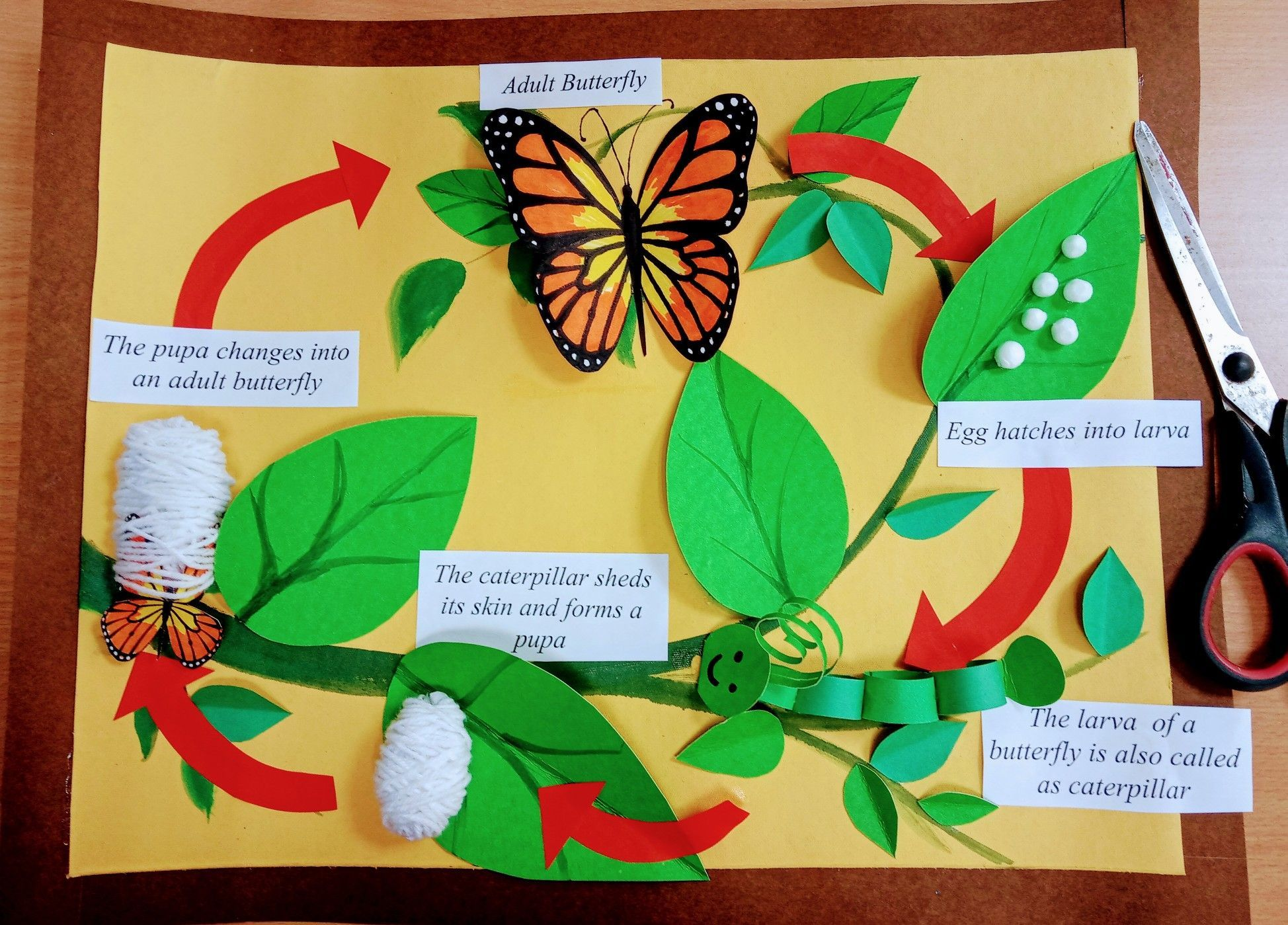 Butterfly Life Cycle Board