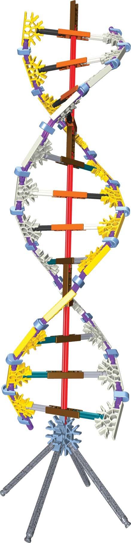 K'Nex Education DNA/ Replication and Transcription Set