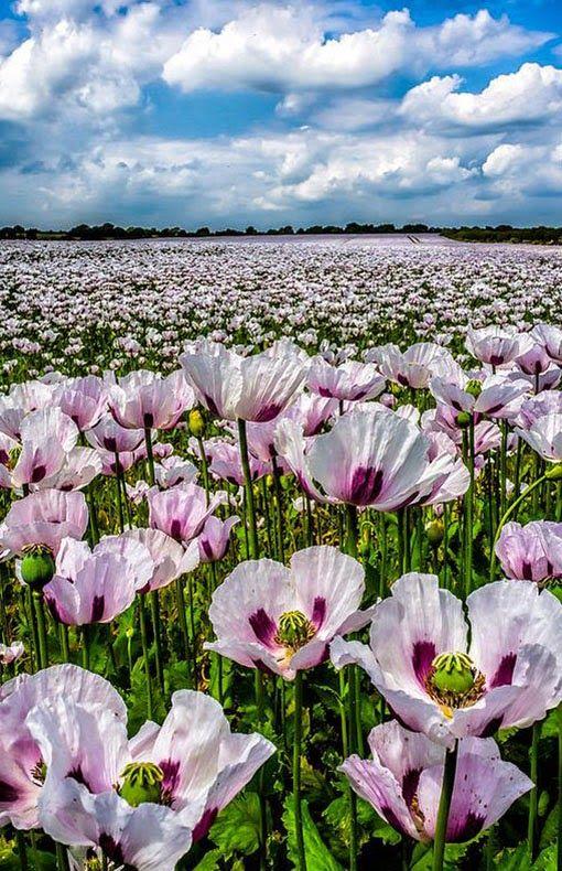 Hampshire Uk Wiki Mit Bildern Schone Blumen Blumen Wiese Liebe Blumen