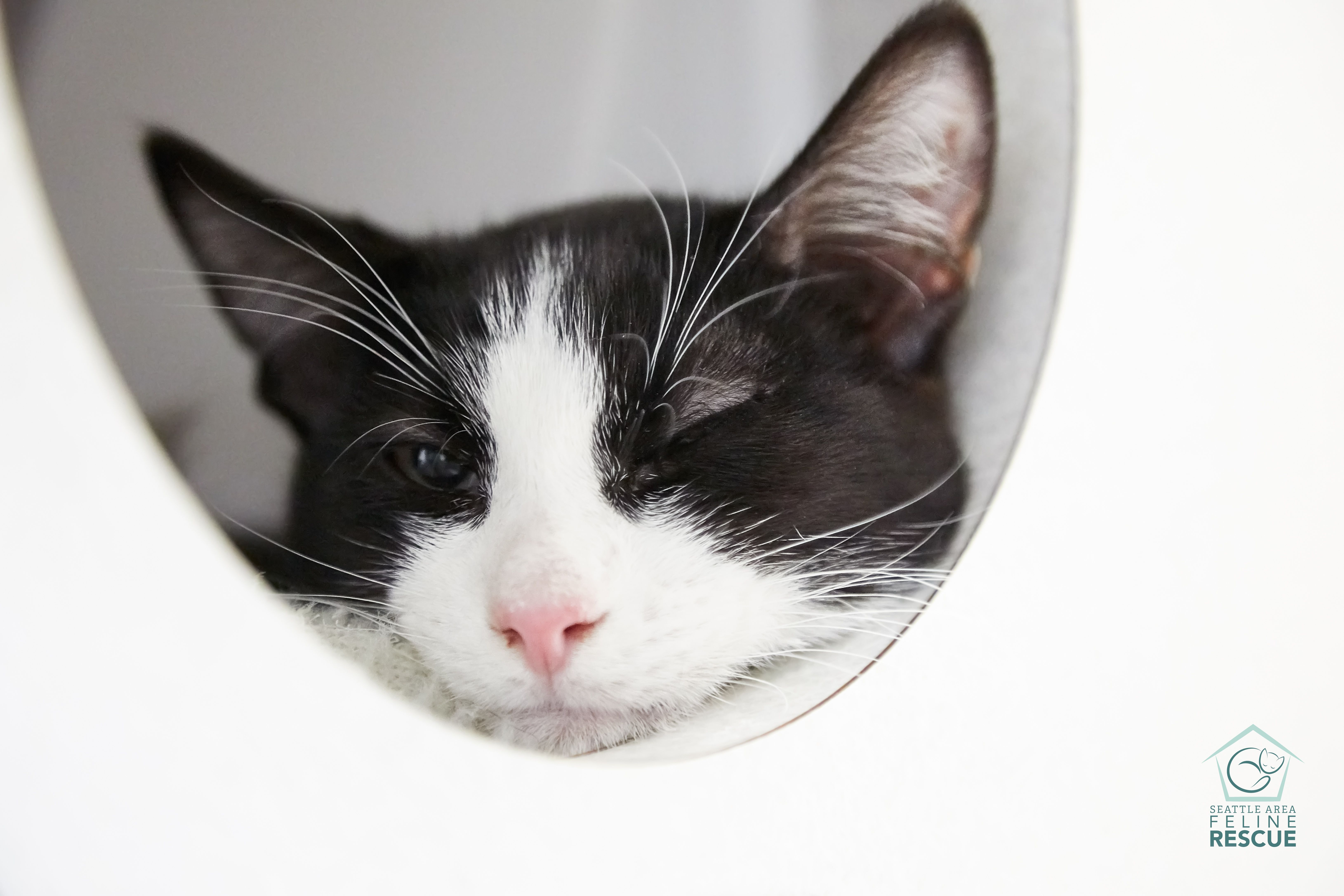 Available Cats Kittens Cats And Kittens Cat Adoption Cats