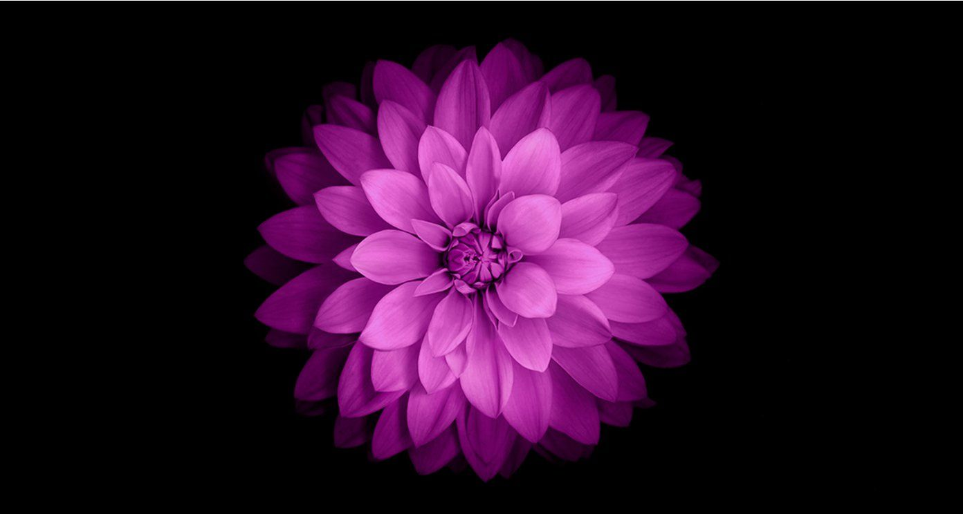 Flower IOS 8 Wallpaper For PC Wallpaper