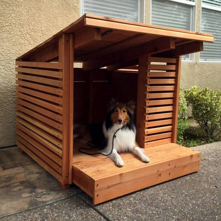 Pets We Love Animals Of All Shapes And Sizes We Design To Our