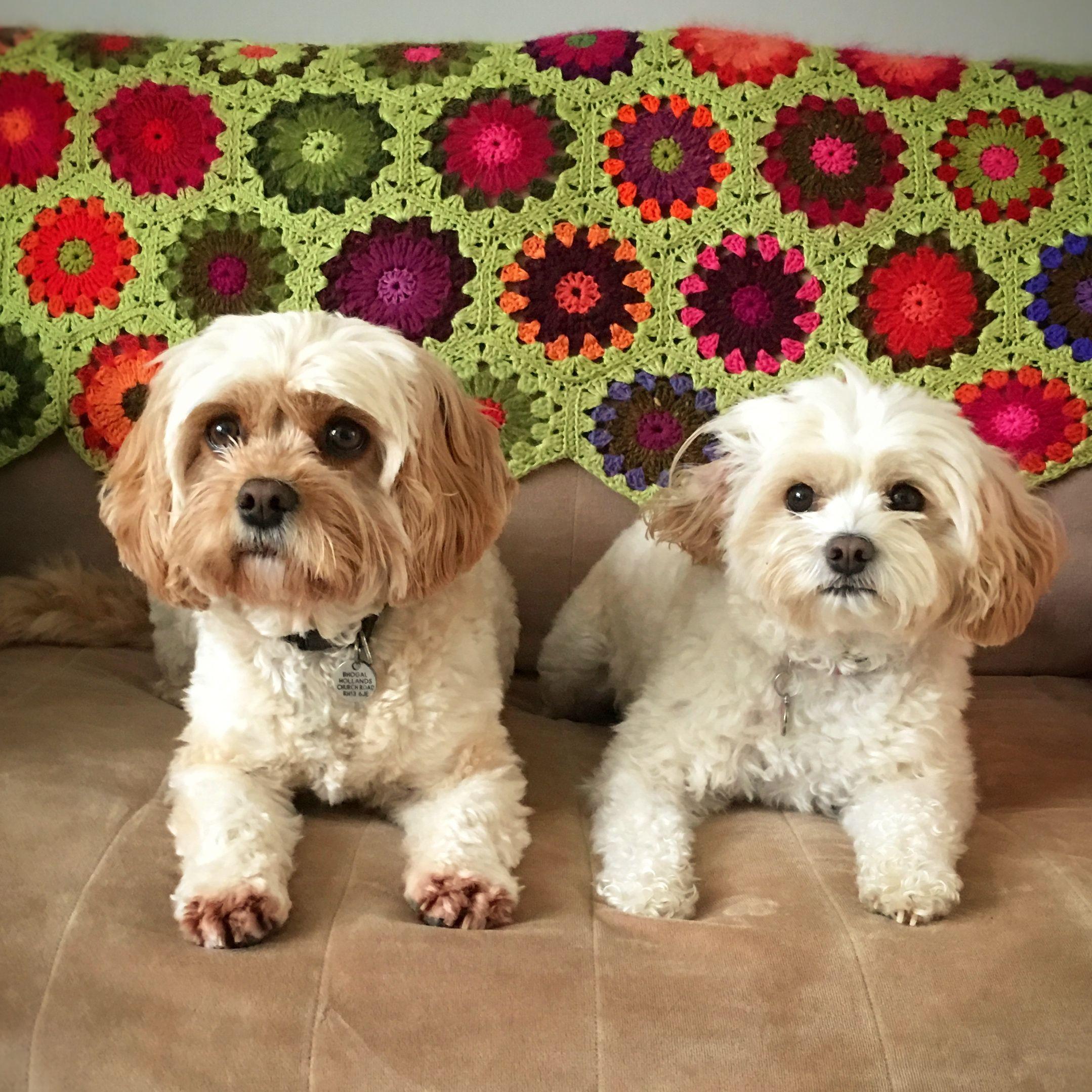 Me + Effie = Double trouble! Beautiful dogs, Cavapoo