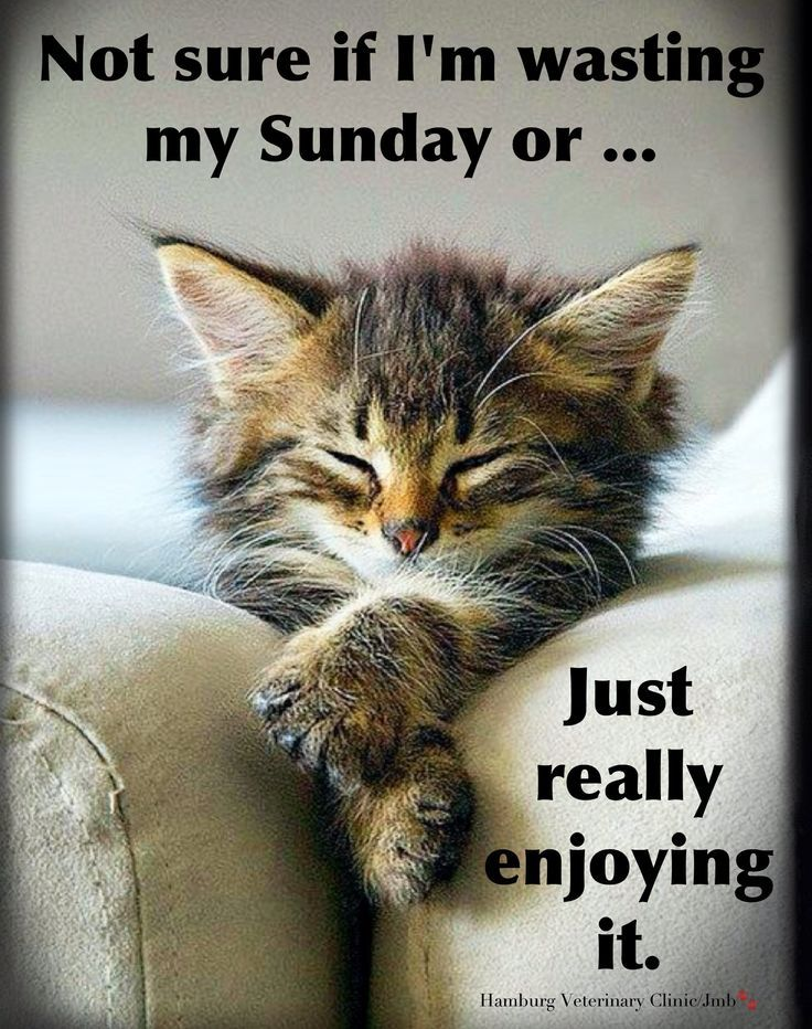 Image result for sunday images funny Cute cats, Cats