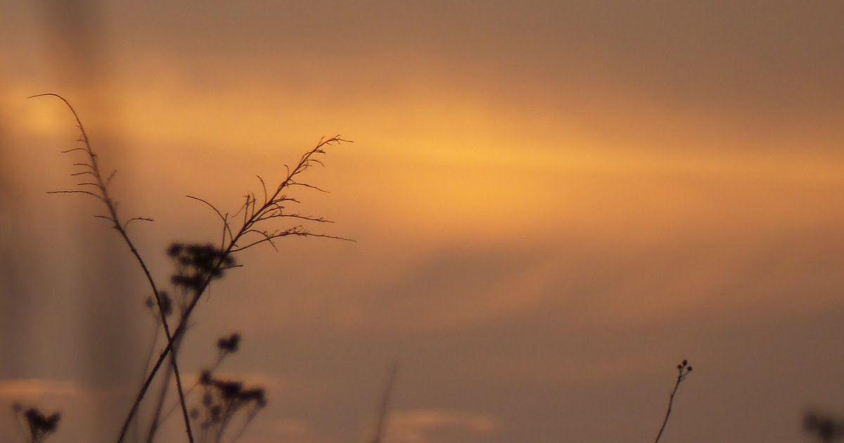 Paling Keren 30 Gambar Matahari Terbit Pagi Hari Indonesia Langit Matahari Terbenam Malam Horison Pagi Fenomena Di 2020 Matahari Terbenam Matahari Terbit Pemandangan