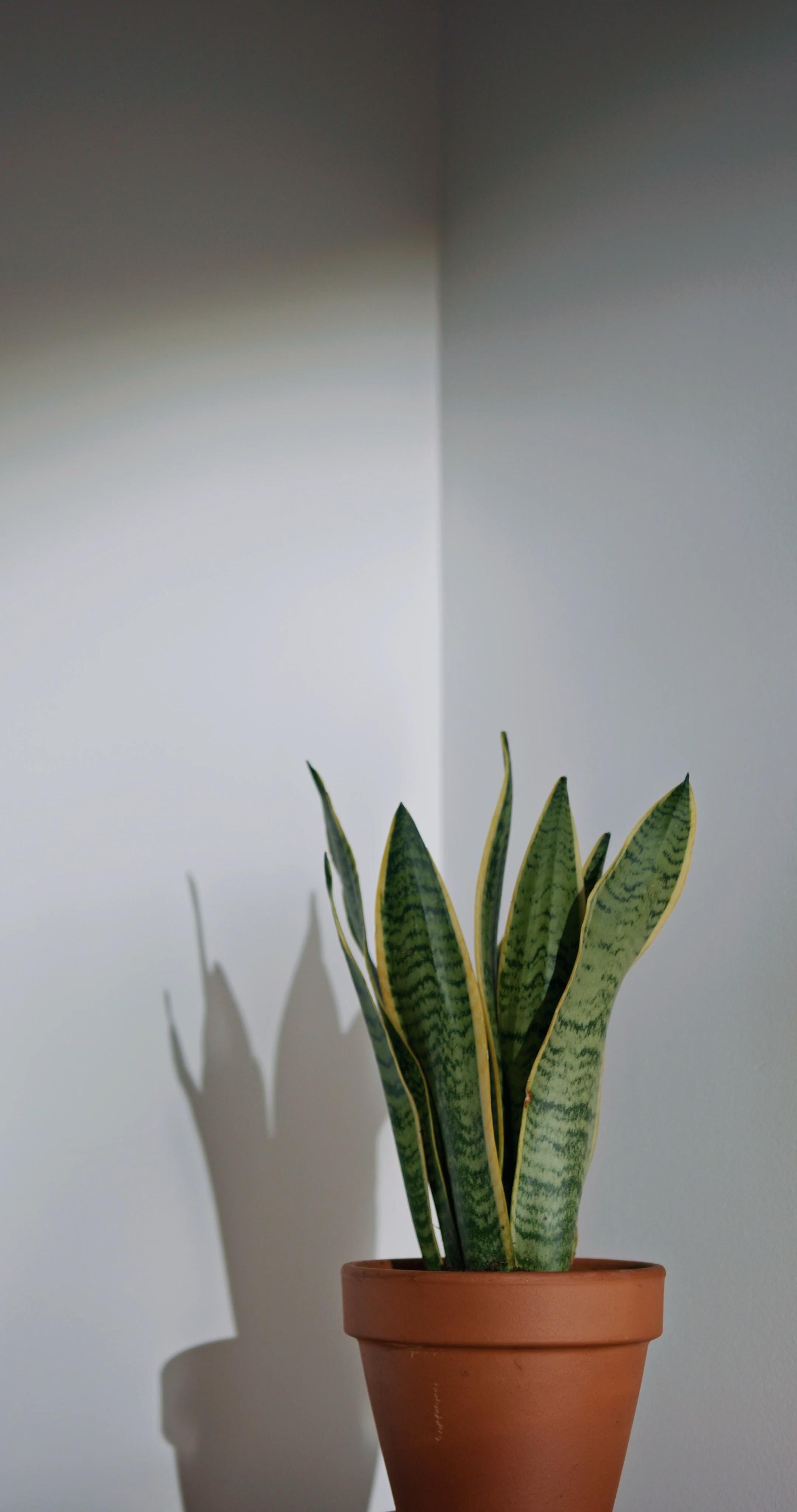 Video Rustic Laser Studio Affordable Way To Personalize Your Home Or Office Wallpaper Tanaman Bunga Kering Tanaman Hijau