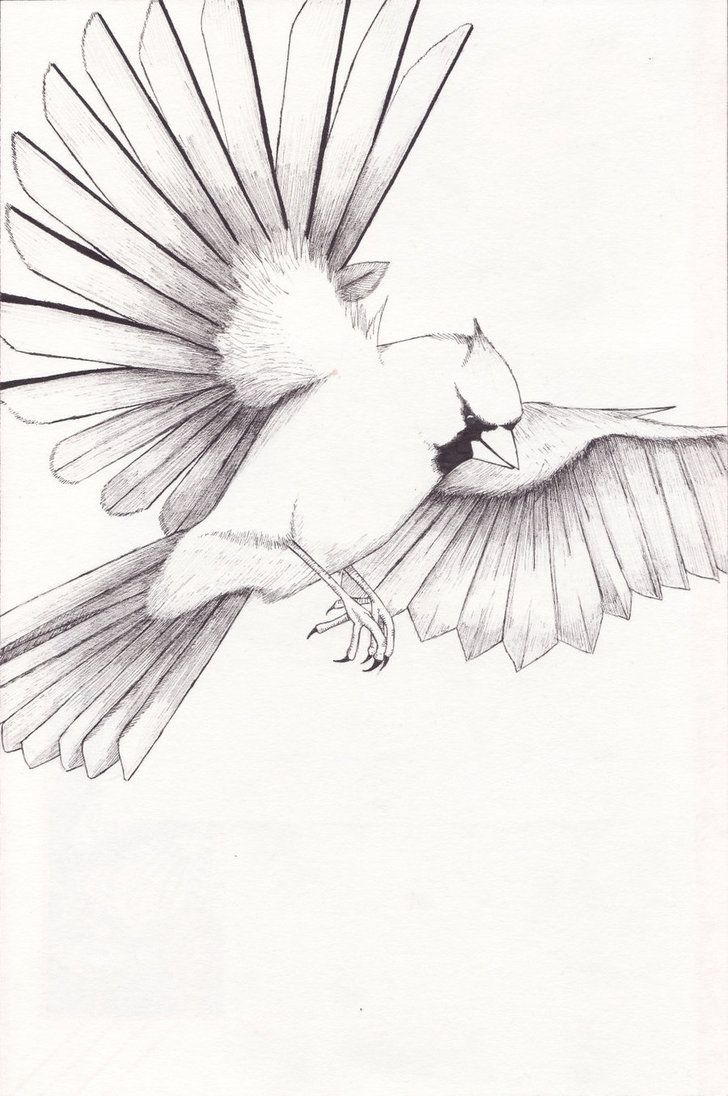 Cardinal Coloring Pages Pictures IMAGIXS coloring