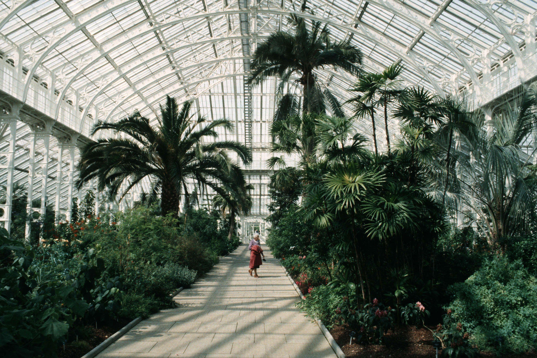 Royal Botanic Gardens Kew Uk Orchid House Botanical Gardens Kew Gardens