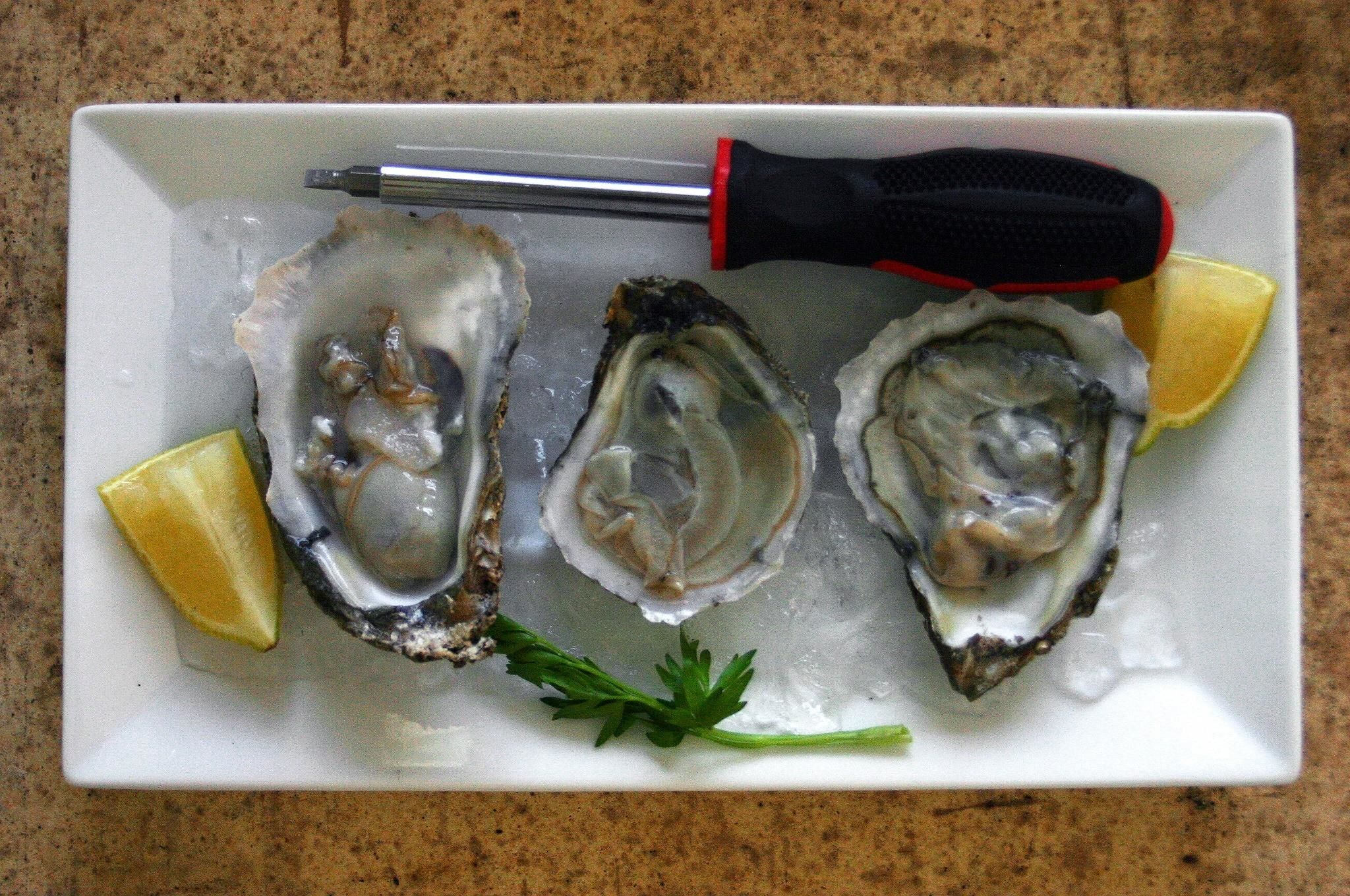 How to shuck an oyster without an oyster knife shucking