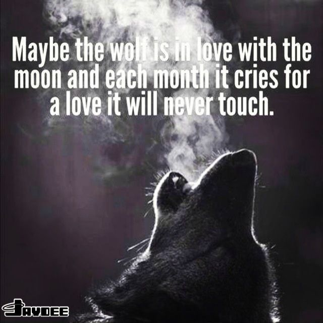 Quotes About Love Lost : ... Quotes and Sayings Wolf howling at the moon quote.
