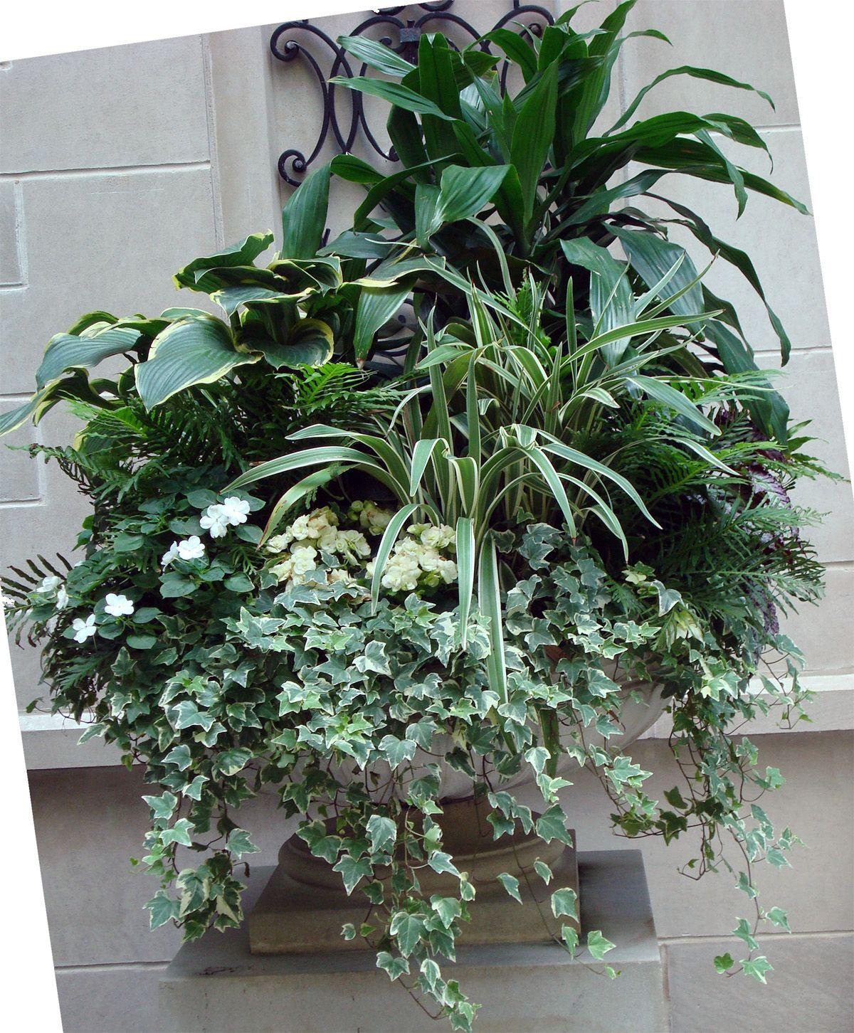 summer  planter  container  greens  whites  urban  garden  landscape  design  entryway