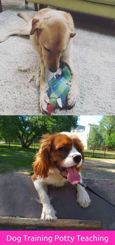 Funny dog jokes meme dog training potty watches pinterest dog