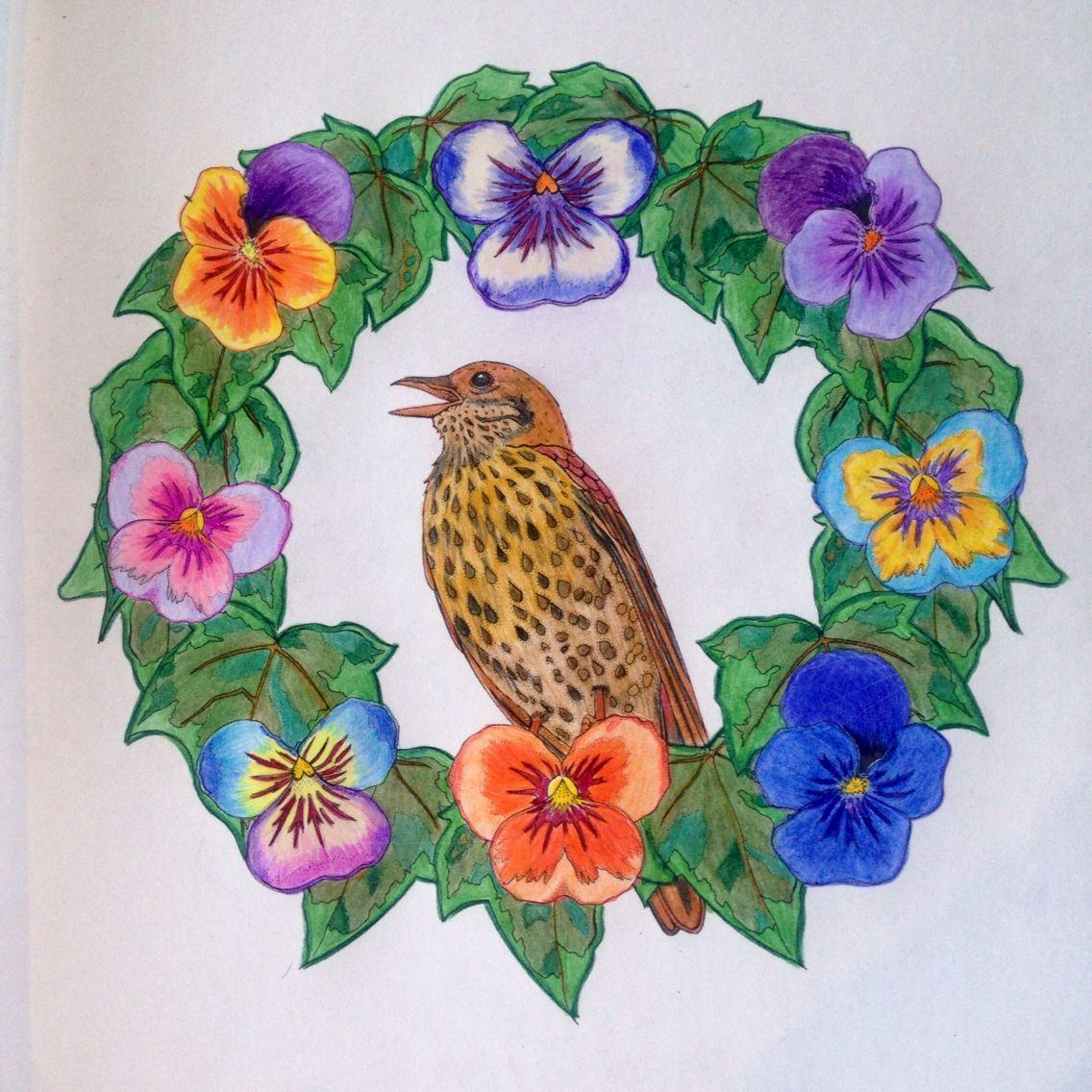 Coloring Book Birdtopia Daisy Fletcher Mandala Coloring Coloring Books Beautiful Birds