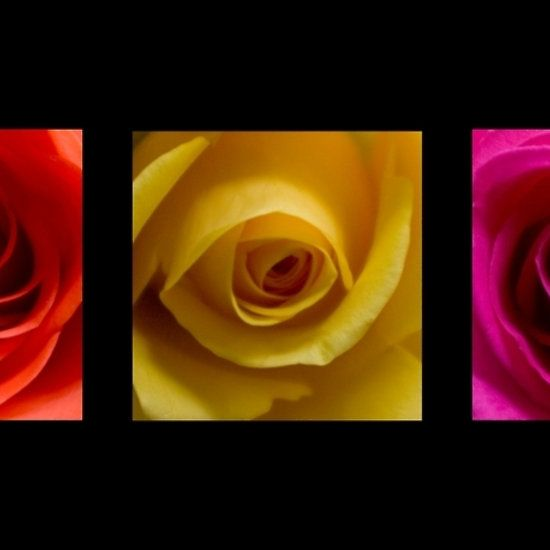 Triptych Roses Print