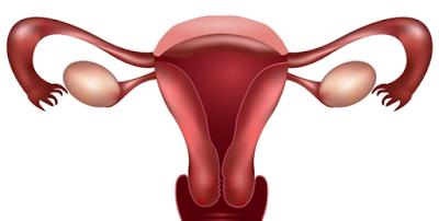 Transplante dos ovários é seguro e eficaz nas mulheres com câncer  As mulheres jovens diagnosticadas com cancro do ovário têm boas probabilidades de ficarem grávidas, graças a um transplante seguro dos ovários