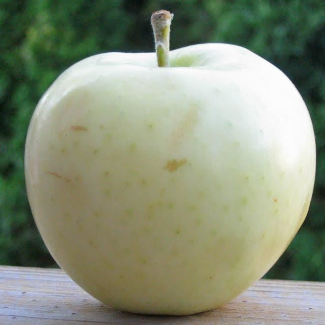 White Transparent, Ghost or Spirit Apple, or Apples of