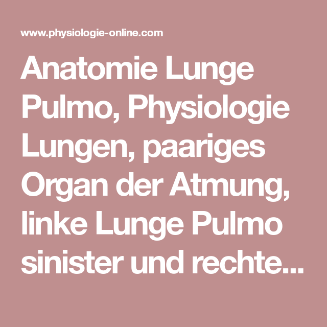 Anatomie Lunge Pulmo, Physiologie Lungen, paariges Organ der Atmung ...