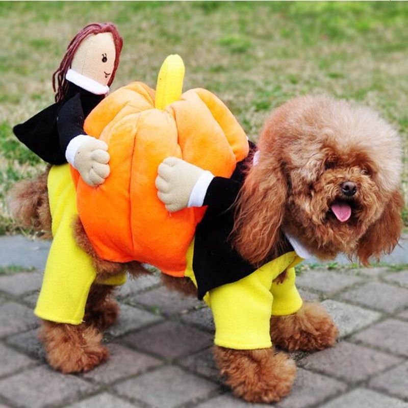Pumpkin Carrying Dog Costume Dog Halloween Costumes Pet