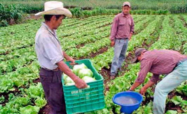 SAG impulsará estrategia para mayor exportación agrícola - Diario La Tribuna