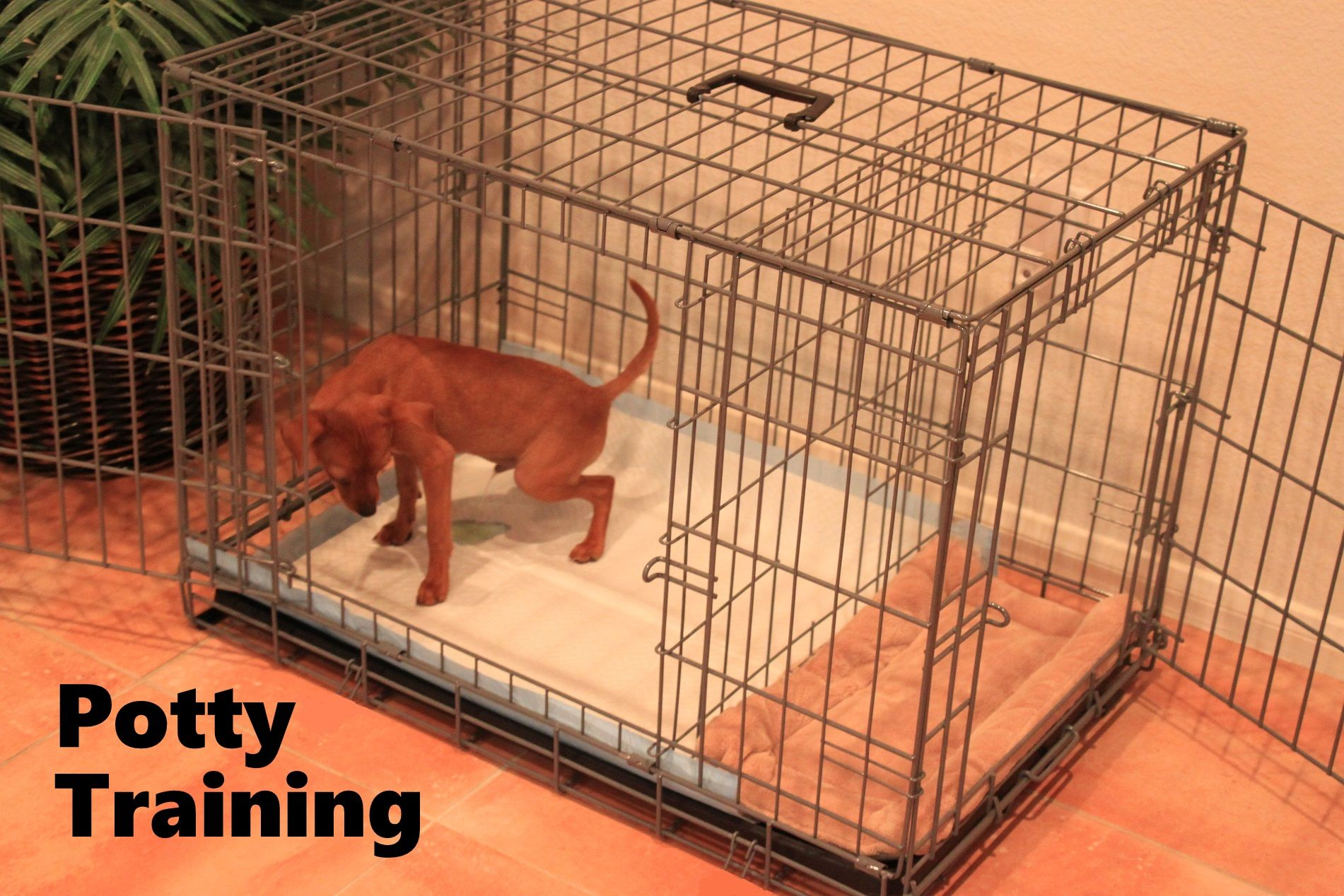 Potty Training A Puppy We Have A Fast Easy Solution Over