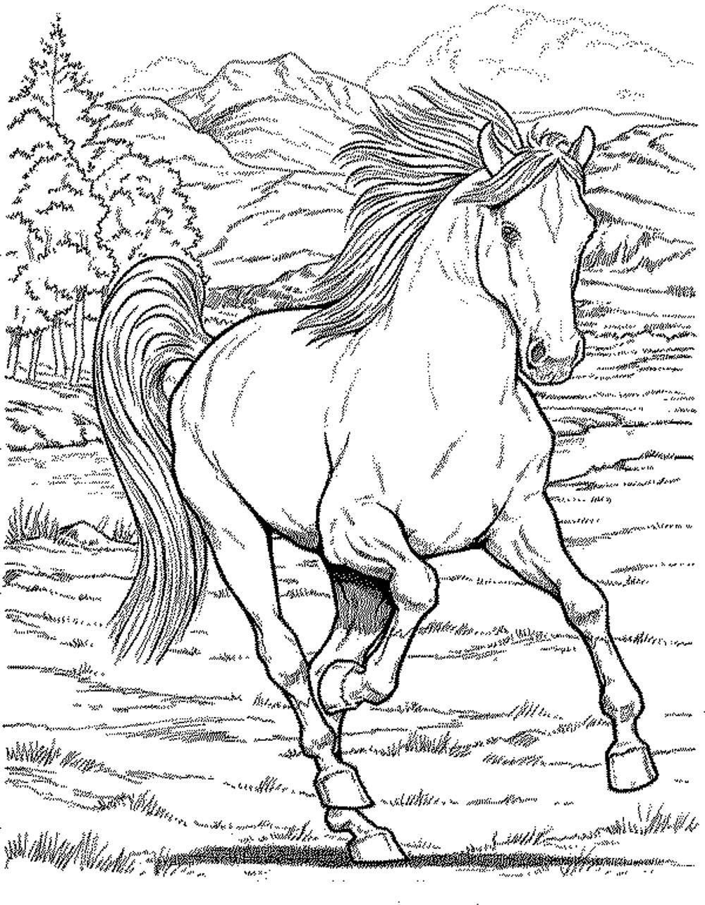 Coloring book pages of horses - Horse Coloring Pages For Adults
