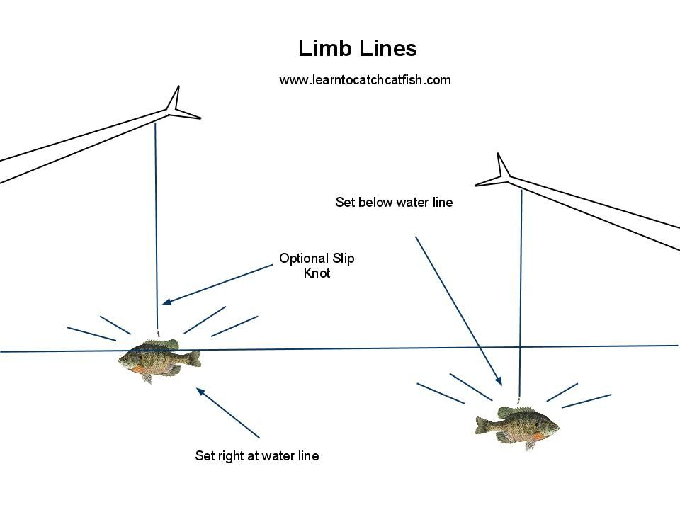 Catfishing with limb lines is a pretty simple process