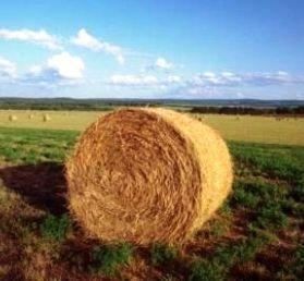 Carburante agevolato agricoltura: contratto di comodato di terreni in forma scritta: https://www.lavorofisco.it/carburante-agevolato-agricoltura-contratto-di-comodato-di-terreni-in-forma-scritta.html