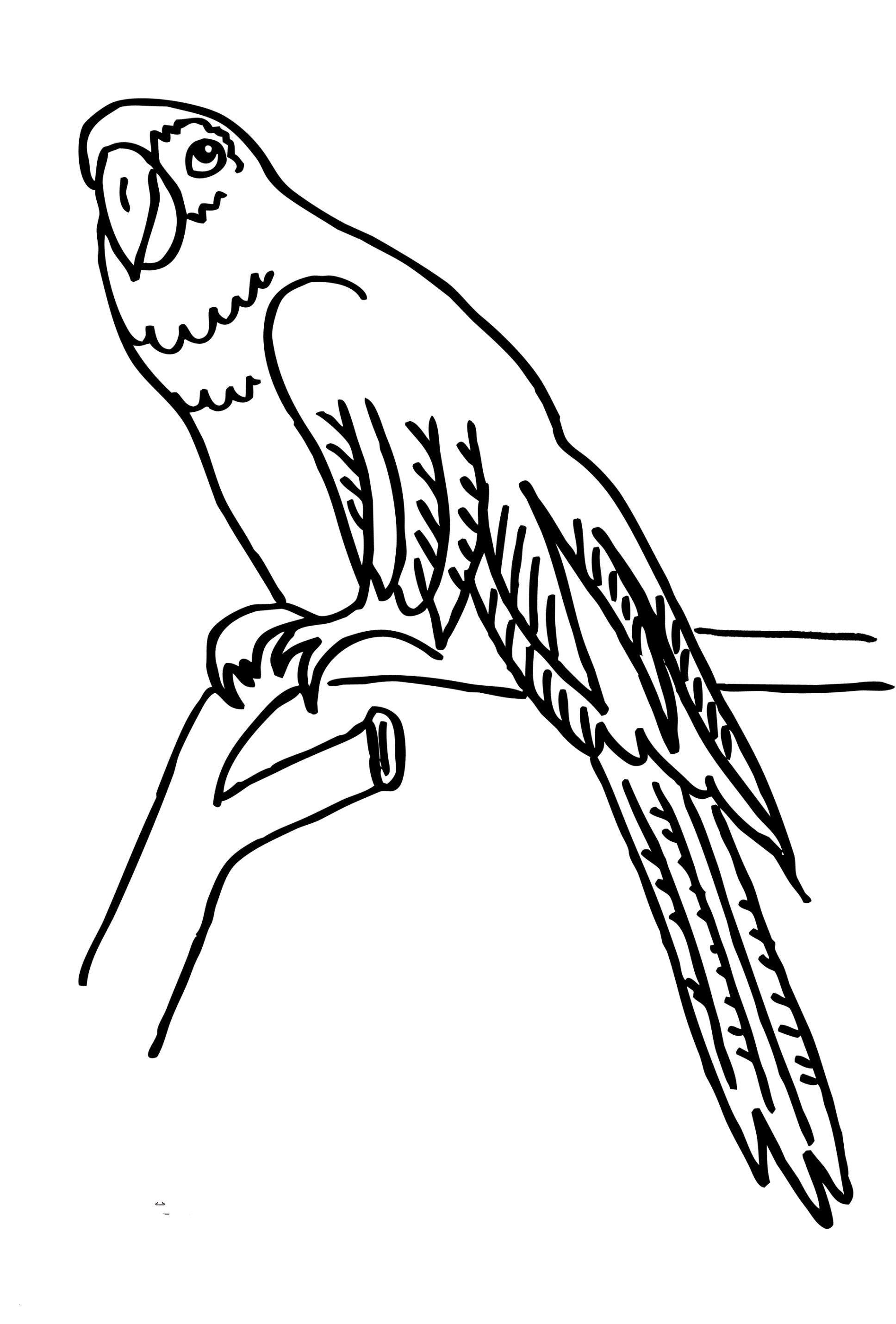 Spektakulär Malvorlage Papagei Aufenthalt Cool und vielen Dank für