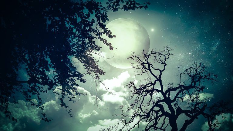3d Nature Background Free Download Nature Hd Moon Tree