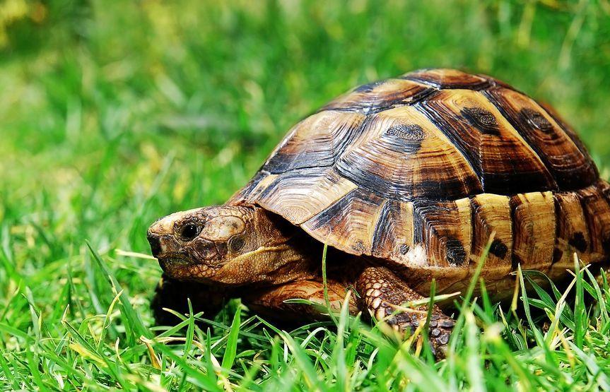 Gazdik Csodaja Reg Eltunt Majd Elokerult Hazi Kedvencek Tortenete Proaktivdirekt Eletmod Magazin Es Hirek In 2020 Turtle Green Grass Green