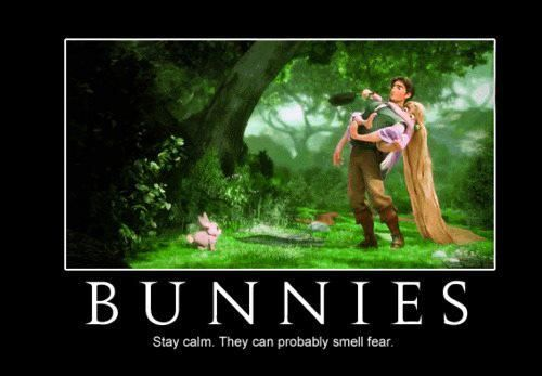 this bunny could...
