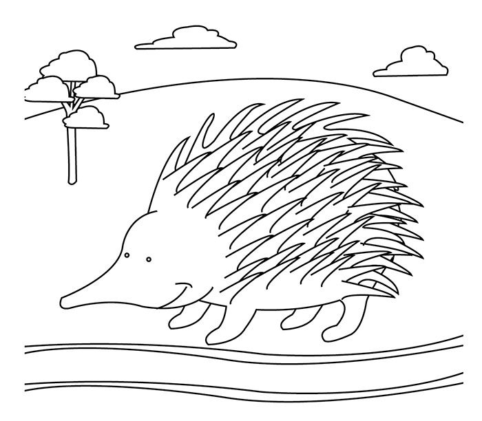 50 Australian Animal Template Shapes Crafts Colouring Pages