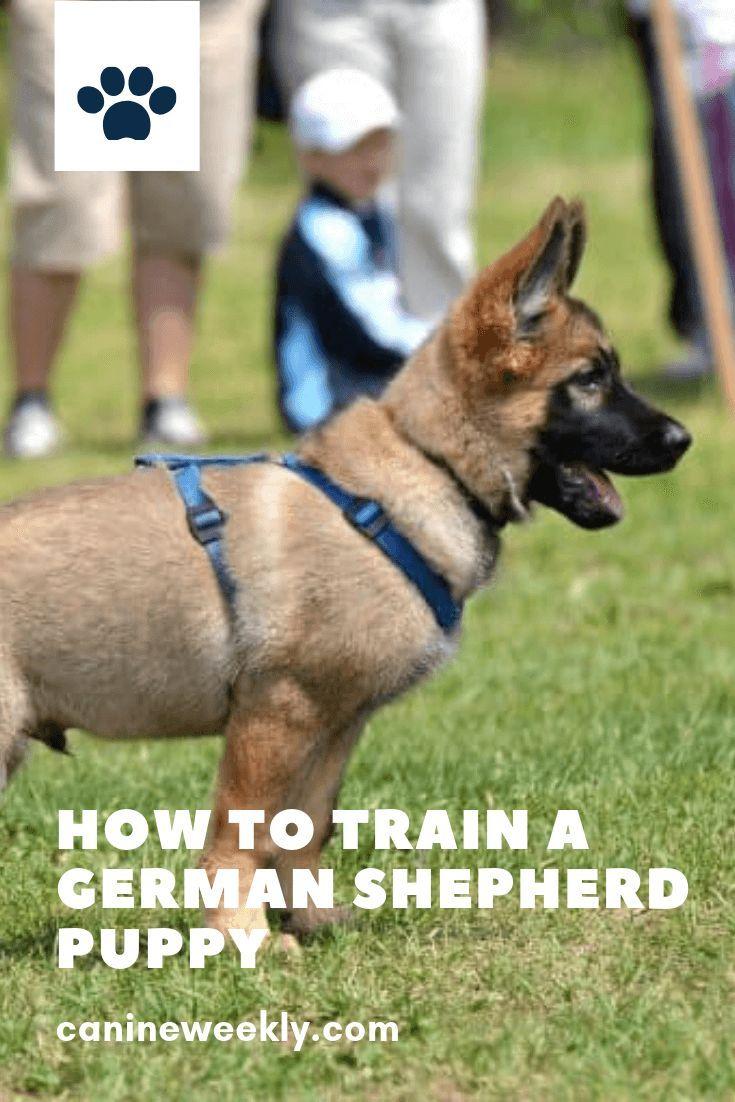 How To Train A German Shepherd Puppy German Shepherd German