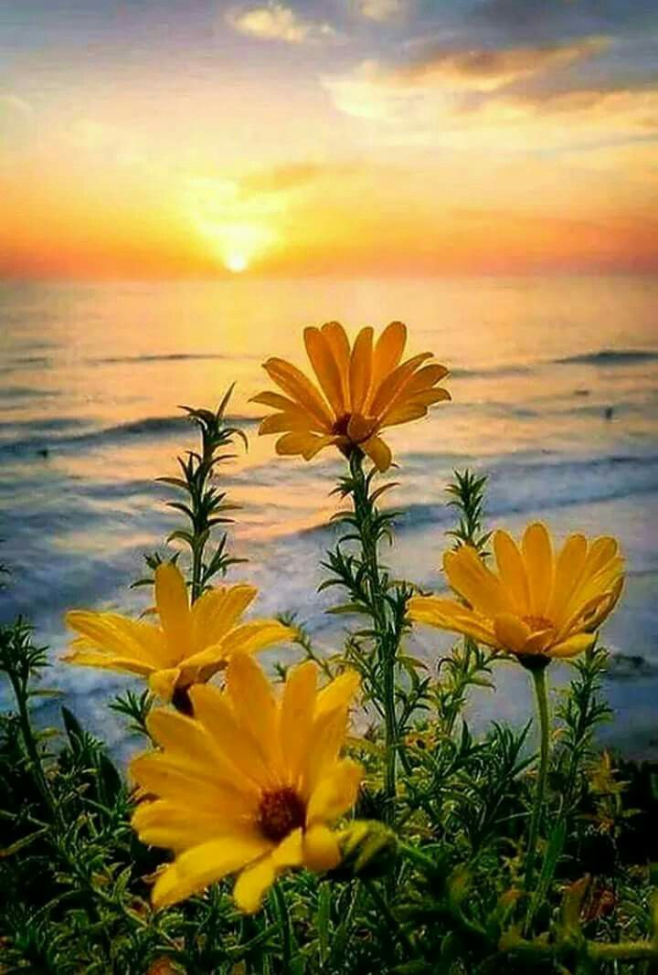 Beautiful yellow flowers in a yellow sunset
