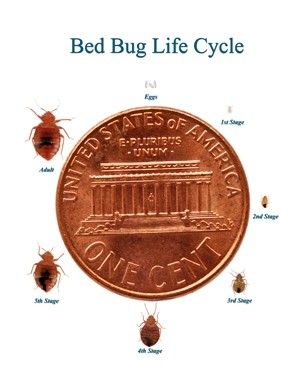 Can you get rid of bed bugs with bleach