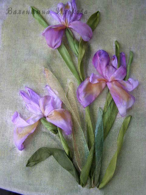 Цветок ирис рисунки