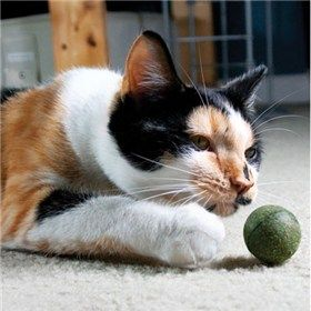 Pawbreakers The Catnip Candy For Cats Is An All Natural Healthy Safe And Fun Toy Ball And Treat Rolled Into One A Purrrfect Com Cats Pet Toys Cat Toys