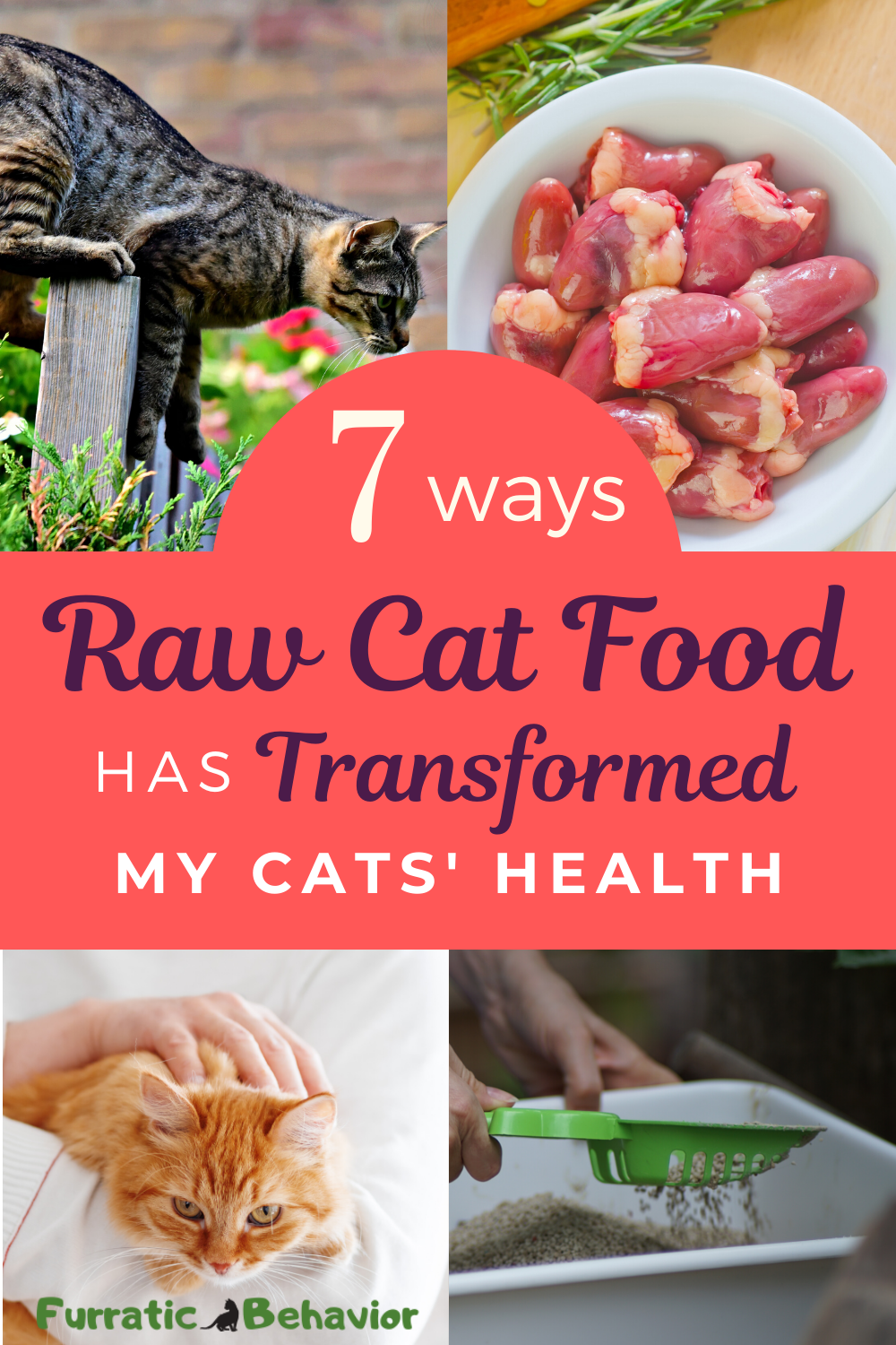 The 1 Way To A Healthy Cat Is By Feeding Them A Balanced Nutritious Raw Cat Food Learn How A Raw Die In 2020 Healthy Cat Food Raw Cat Food Recipes