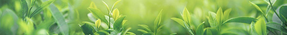 Natürliche Hausmittel gegen Eierstockzysten - Enzyme und Nachtkerzenöl