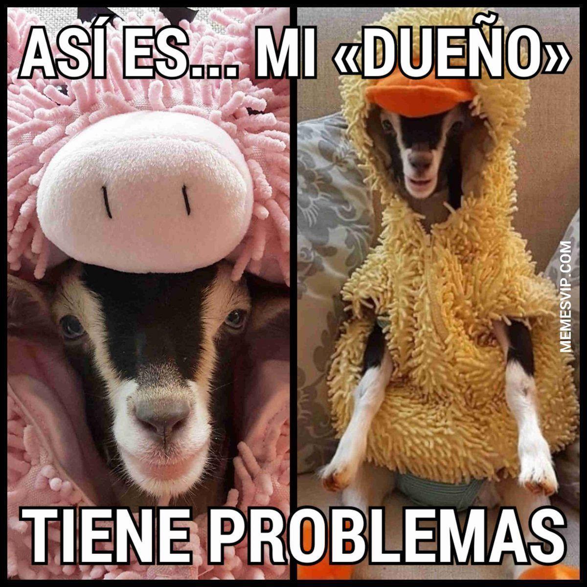Spanish memes cabra disfrazada pato #2018 #2019 #detodo #chistes #meme #memes #momos #español #memesenespañol #memesvip #chistecorto #humor #funny #risa #lol #chistesmalos #comparte #funnypictures #divertido #gracioso #animales #disfraces #spanishmemes #spanishhumor