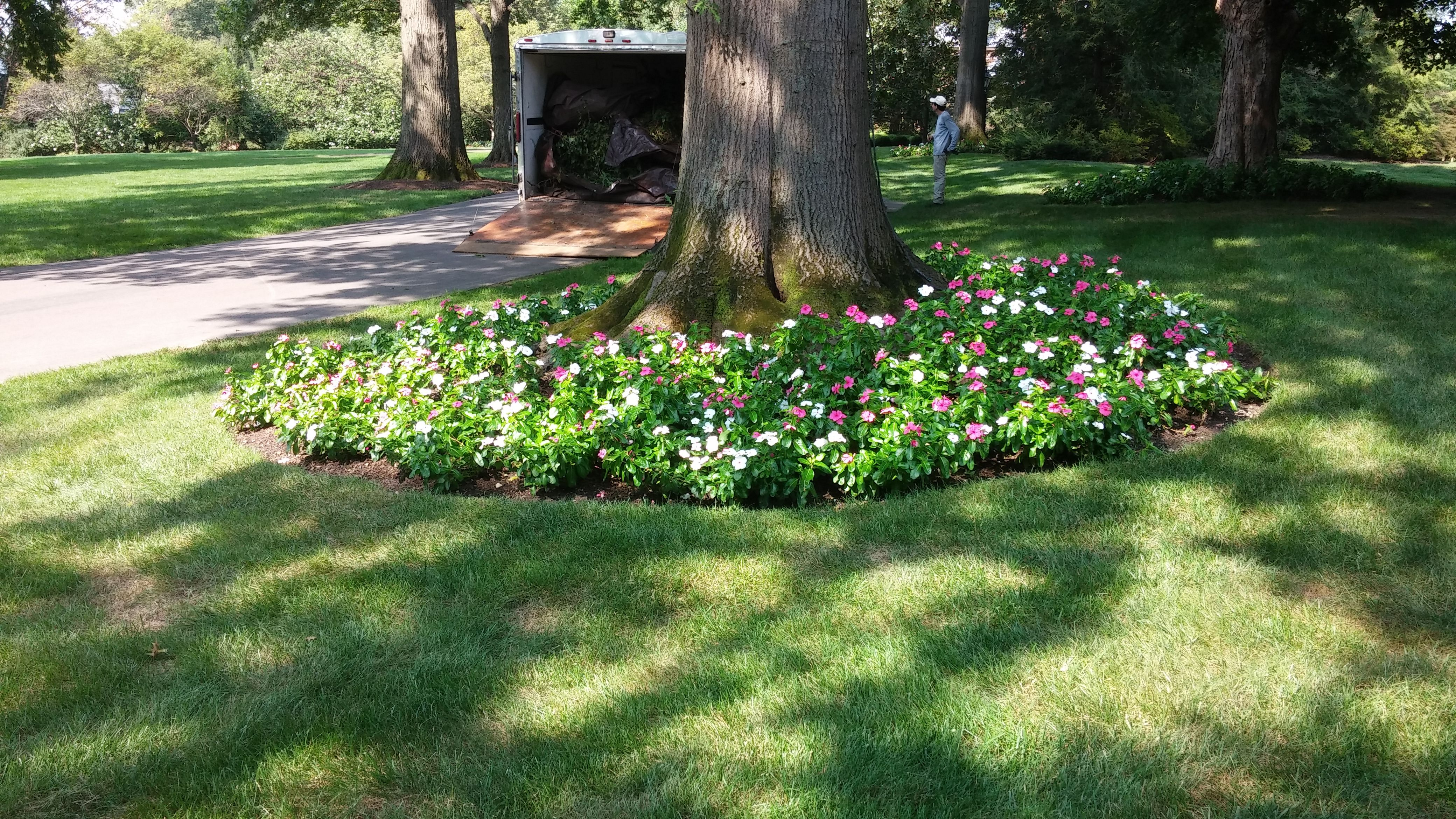 Planting Annual Flowers In The Mulch Of Your Tree Rings Can Be A