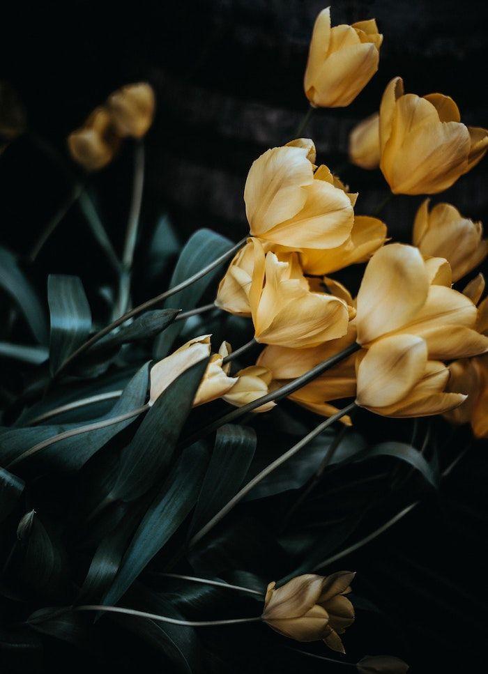 1001 Images Pour Un Fond D Ecran Fleur Magique Fond Decran Fleur Tulipes Jaunes Fleurs