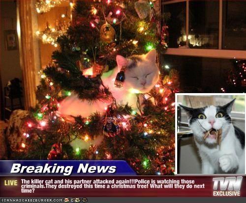 On The News At 11 Cat Christmas Tree Christmas Cats Christmas Animals