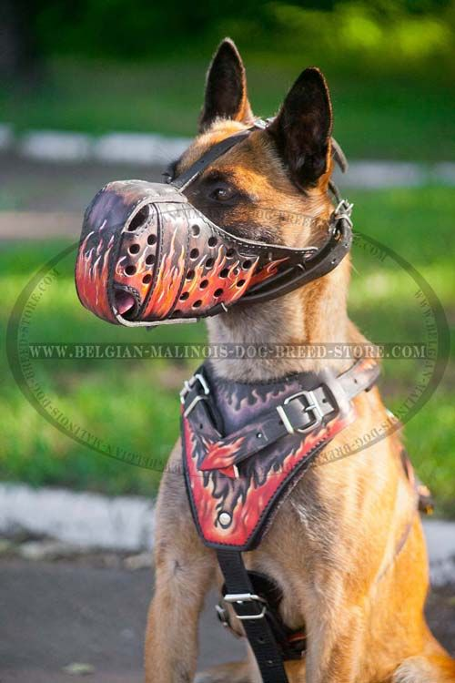 Belgian #Malinois #Leather #Harness made of safe materials ...