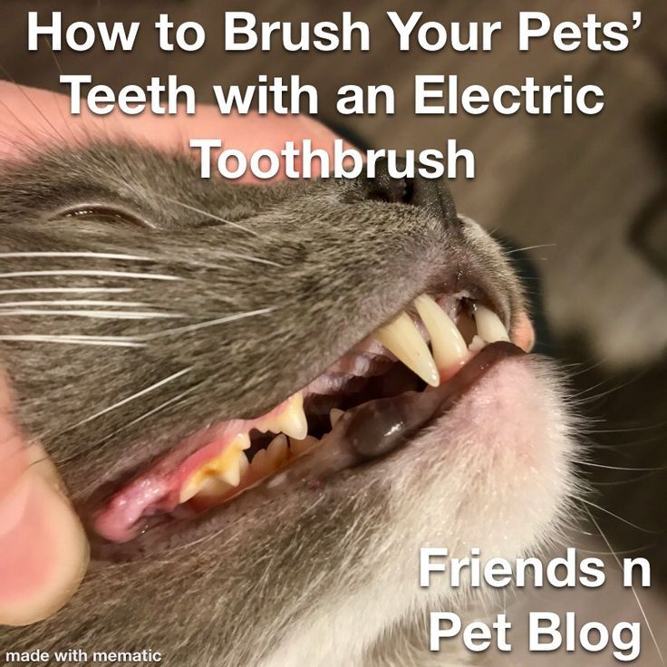 How to Brush Your Pets' Teeth with an Electric Toothbrush