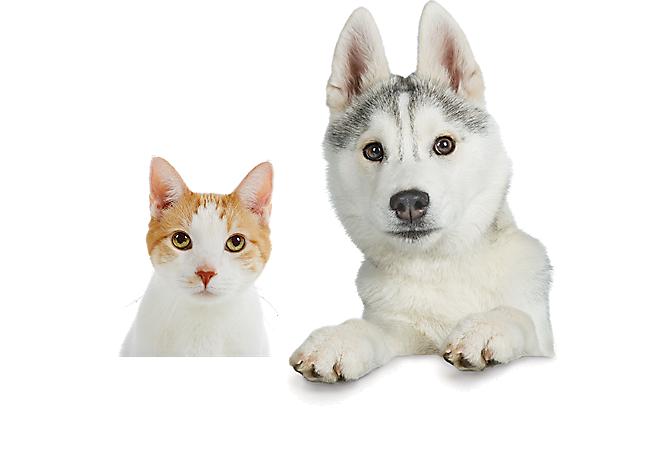 dog and cat Pets, Your pet, Petsmart
