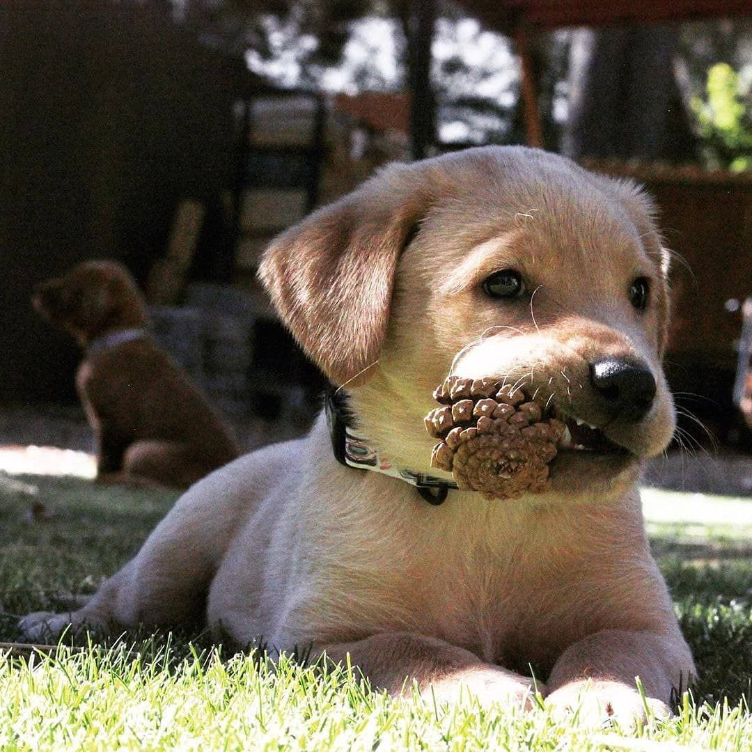 Dog Idea Dog Homes Dog And Baby Dog Projects Dog Cat Dog Ate Dog Home Ideas Home Dog Dog And Puppy Puppy Dog Dog Cute In 2020 Famous Dogs Labrador Dog Love