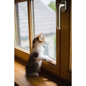 猫 ネコ Gahag 著作権フリー写真 イラスト素材集 猫 子猫 フリー 写真