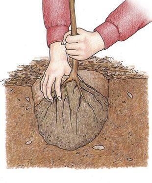stardew how to get seeds in winter