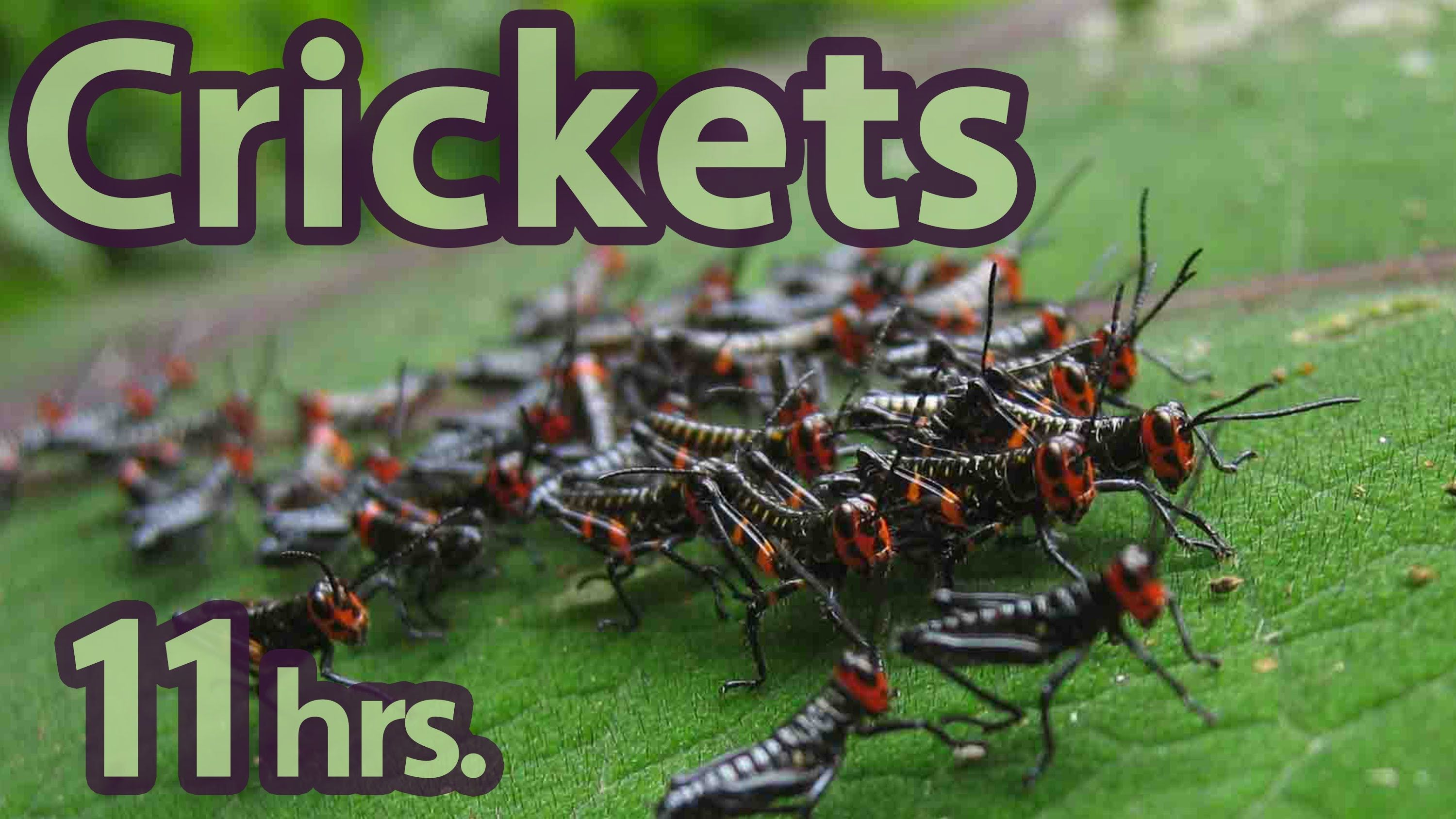 11 hours crickets 11 of 59 pure nature sounds sounds